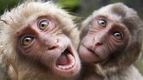 Funny Monkeys 2017 ???? ???? ???? [Funny Pets] - YouTube
