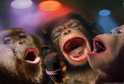 Funny Pictures of Monkeys - Cute Girl Band | Funny ...