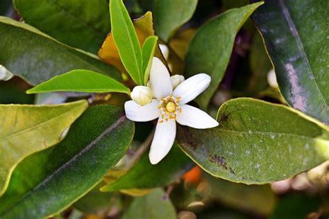 Galería Con 31+ Fotos de Plantas de Exterior Resistentes ...