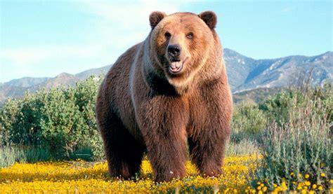 Galería de imágenes: Imágenes de osos