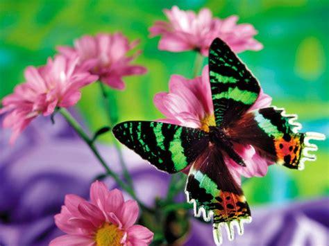 Galería de imágenes: Mariposas de colores