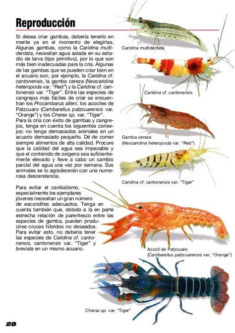 Gambas y cangrejos