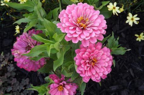 Garden Flower Names Common Garden Flowers Garden Flowers Names