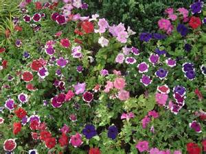 Garden flowers names and photos