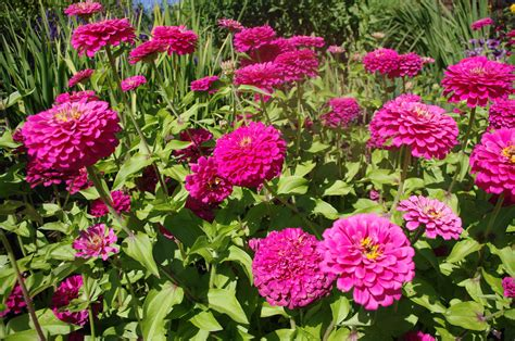Garden Flowers Pictures And Names – Garden Ftempo