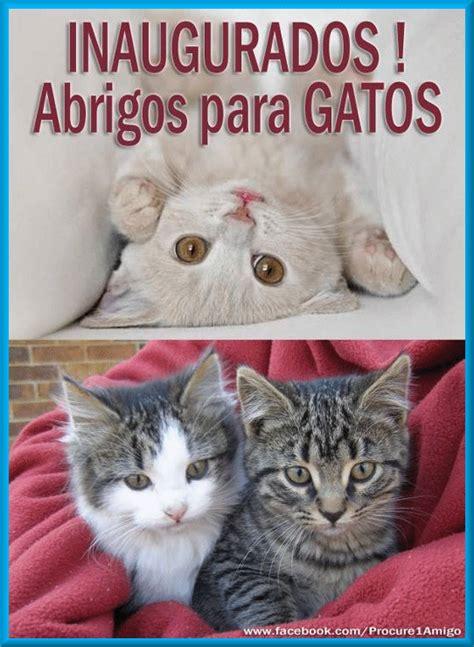 GatoMania: INAUGURADO Abrigos para Gatos!
