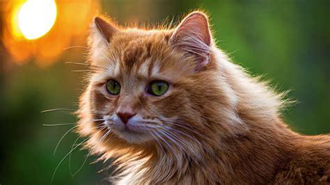Gatos cats salvapantallas wallpapers HD 4K UHD Ultra High ...