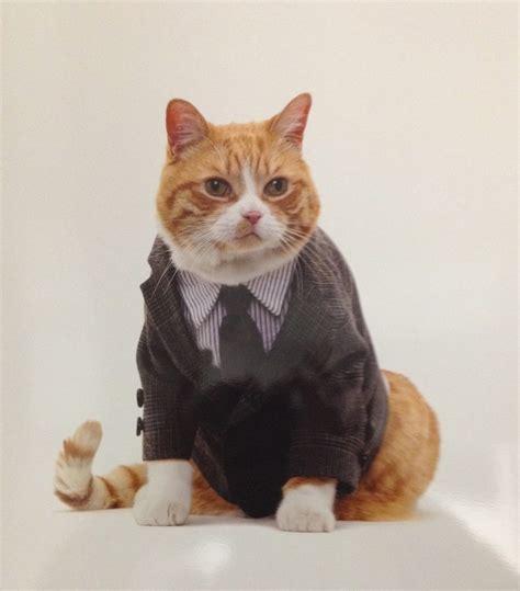 Gatos con ropa para el calendario de United Bamboo – Viste ...