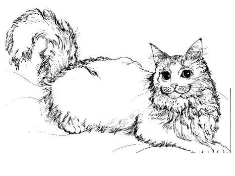 Gatos Enamorados Imagenes