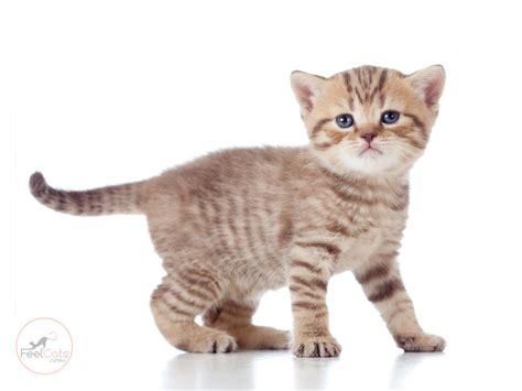 Gatos, toda la Información sobre ellos ¿los conoces bien ...