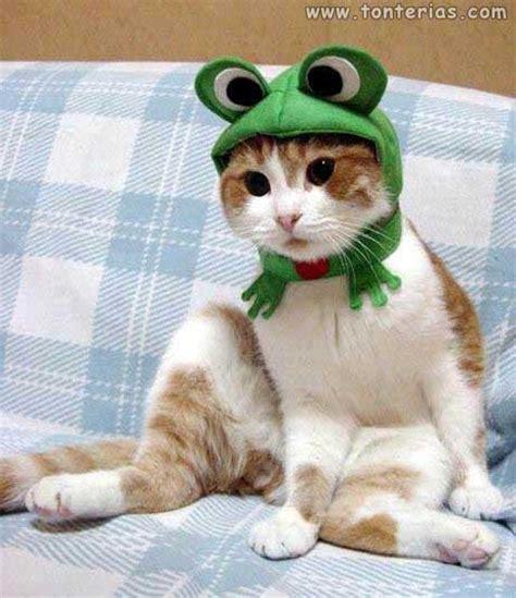Gatos vestidos-5   Tonterias.com