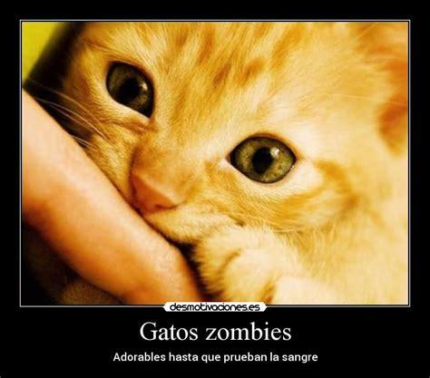 Gatos zombies | Desmotivaciones