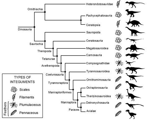 Gefiederte Dinosaurier – Wikipedia