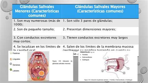 Generalidades de las glándulas salivales copy