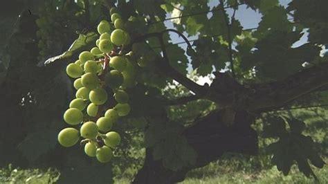 ¿Georgia es el país vinícola más antiguo del mundo ...