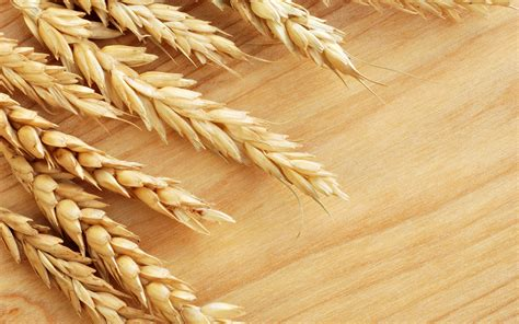 Germany announced that 75% ot the wheat is harvest | Agrodaily