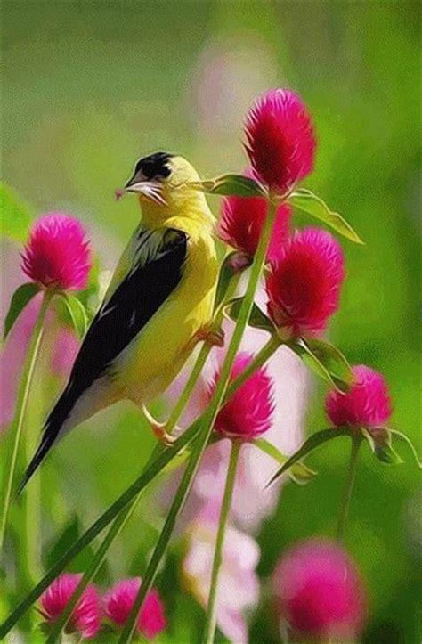 Gif aves mas hermosas del mundo, para que descargues y ...