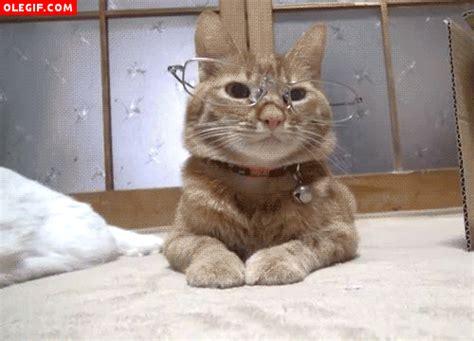 GIF: Gato con gafas (Gif #220)