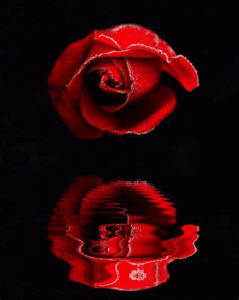 gifs animados de flores,imagenes con movimiento,flowers