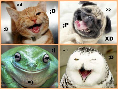 Gifs de animales graciosos (parte 2) - Todo mascotas