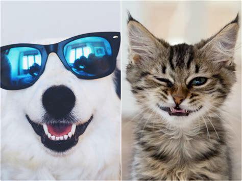 Gifs de animales graciosos - Todo mascotas