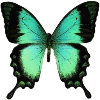Gifs de Mariposas PNG | Fondos de pantalla y mucho más