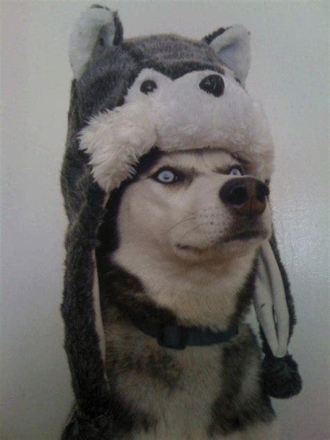 Gifs graciosos animales archivos
