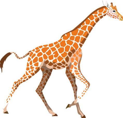 Giraffe Zoo Animal · Free vector graphic on Pixabay