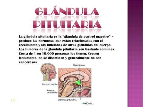 Glándulas pituitarias