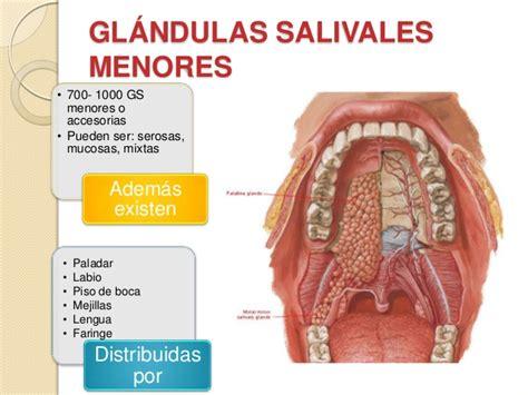 Glandulas salivales final
