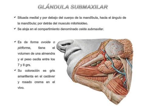 Glándulas submaxilar y sublingual