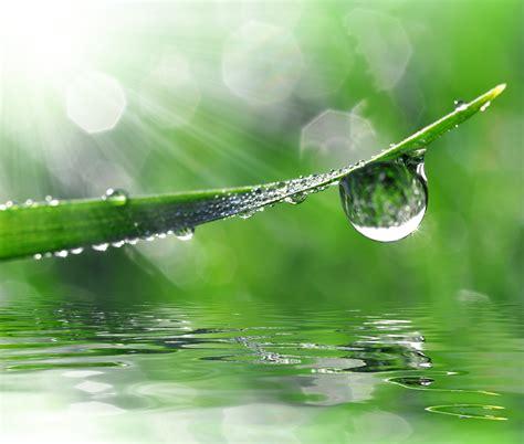 Goutte d'eau sur un brin d'herbe, photo © vencav – Fotolia ...