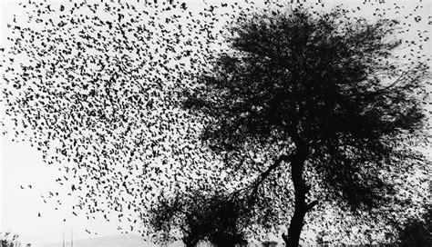 Graciela Iturbide, la mujer que fotografiaba a los pájaros ...