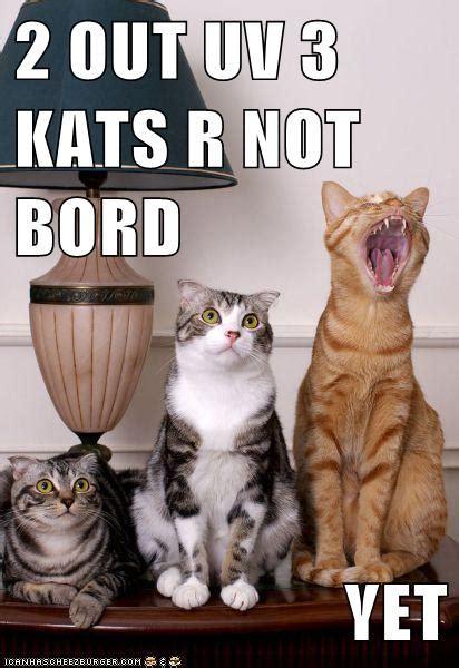 Grammar Catz: Grammar Cat #31: Bored Cat