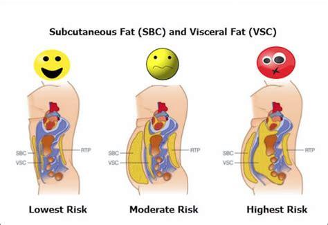 Grasa abdominal: por qué se acumula, cómo evitarla y cómo ...