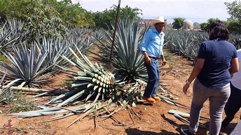 Great times in Tequila, Jalisco, Mexico - YouTube