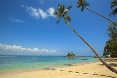 Green Coconut Palm Beside Seashore Under Blue Calm Sky ...