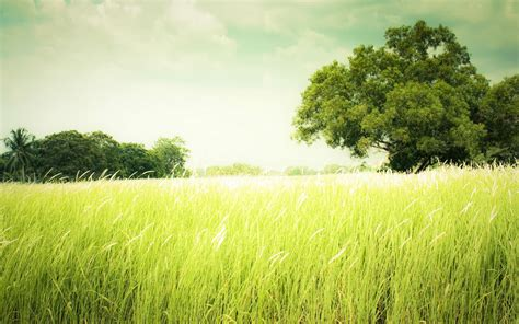 Greenery HD Wallpapers | Nature Greenery HD Pictures – HD ...