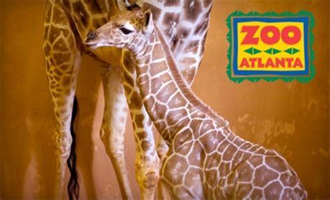 Groupon: Zoo Atlanta $10 Admission :: Southern Savers