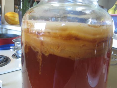 Grow Your Own Kombucha SCOBY: An Experiment ...
