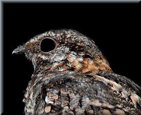 Guía de identificación de aves propia de AvesDeUruguay.com