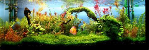 Guía sobre acuarios plantados | TodoAcuarios