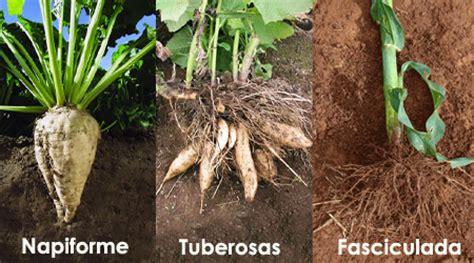 Guía: Tipos de siembra en la hidroponía : .: Hydro ...