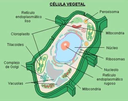 Gustavo Adrian: Las células eucariotas: animales y vegetales