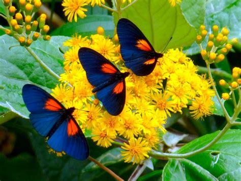 Hábitos de las mariposas diurnas :: Imágenes y fotos
