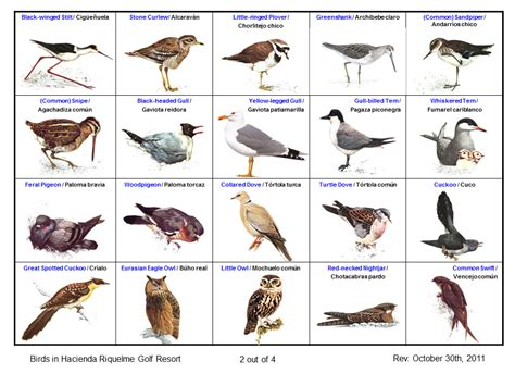 Hacienda Riquelme Blog: Aves en Hacienda Riquelme  6 ...