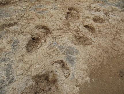 Hallada en Burgos un tipo de huella inédita de dinosaurio ...