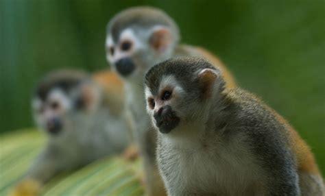 Hallan 37 monos y otros animales para la venta en Corrientes