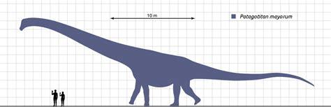 Hallaron el dinosaurio más grande conocido ¡10 veces mayor ...