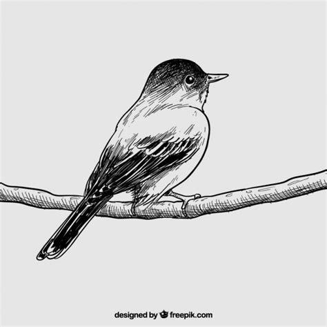 Hand drawn bird Vector | Premium Download